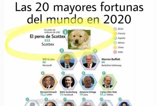 Meme del perro de Scottex.