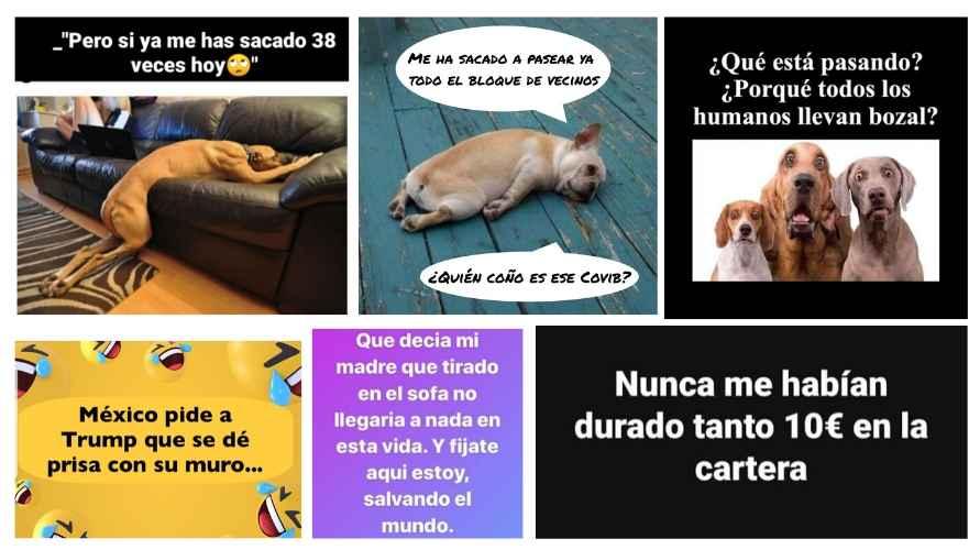 Los perros se han convertido en protagonistas de muchos memes